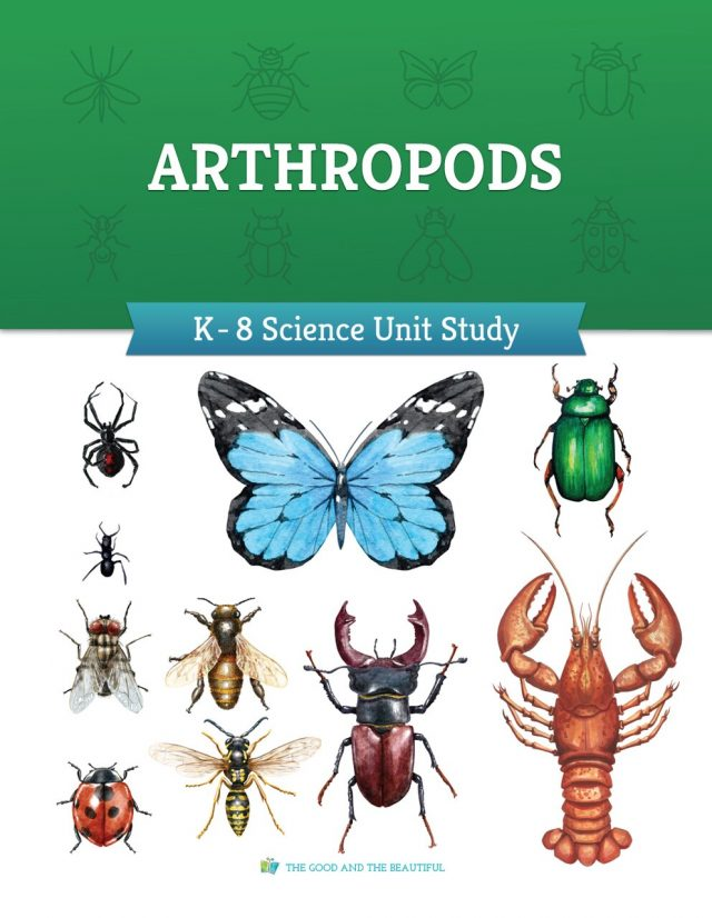 Arthropods- homeschool science curriculum teaching about insects, spiders, and crustaceans.